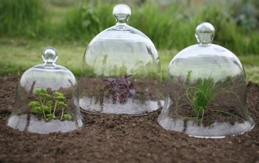 Early American Gardens Cultural Landscapes Glass Bell Jars