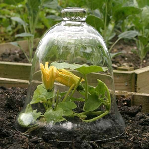 Garden cloche garden cloches internet gardener spring vegetable