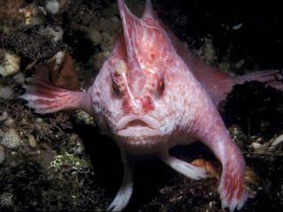 Ikan yang Bisa Berjalan