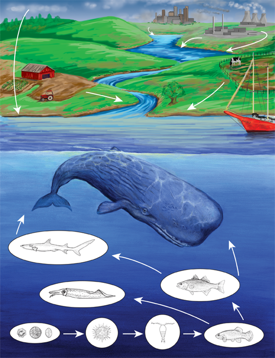 Oceanic Food Web: Scavengers