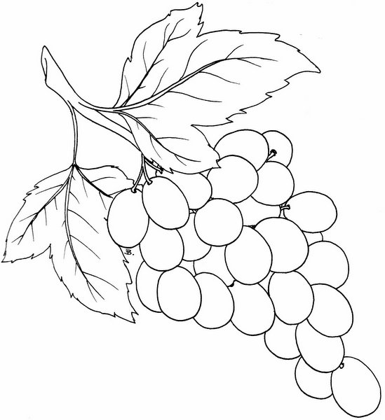 Beccy S Place Bunch Of Grapes