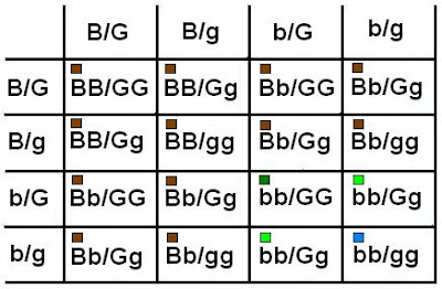 As With The Abo Blood Groups Possibilities Along Left Hand Side And At Top Represent Genotypes Of Eggs