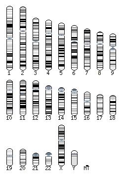 Sandwalk: Summary of Genes on Human Chromosomes