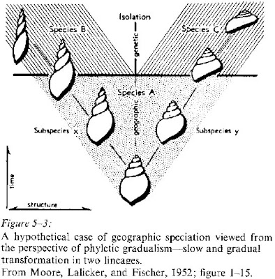 phyletic gradualism Evolution via speciation may occur by one of two alternative models: phyletic  gradualism or punctuated equilibrium phyletic gradualism according to this  model.
