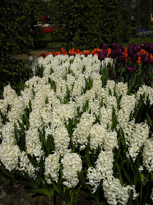 Imagini Olanda: flori la expozitia florala