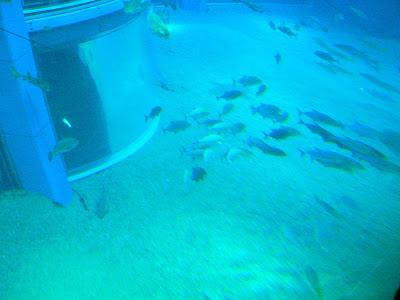Marele acvariu