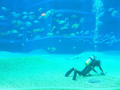 Scafandru in acvariu