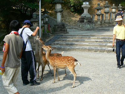 Imagini Japonia: templul Todai-Ji, Nara, caprioare