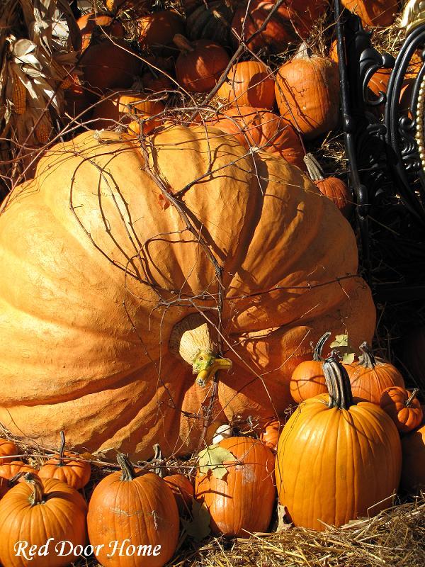 Red Door Home Pumpkins Cornstalks  Spiders  Oh My