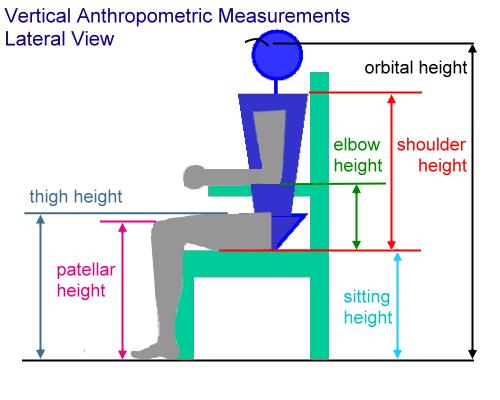 Tom Beech Anthropemetric Considerations