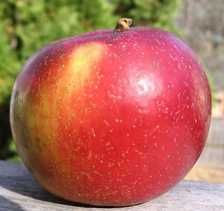 Round, red, mature apple