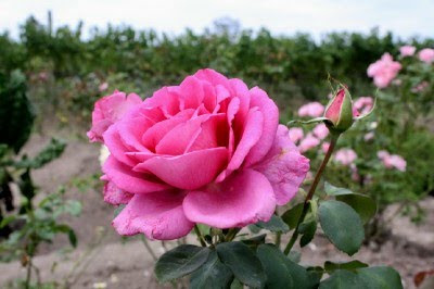 Firefly The Travel Guy: Stop and smell the roses