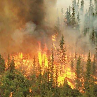 Image Result For Kebakaran Hutan Kalimantan