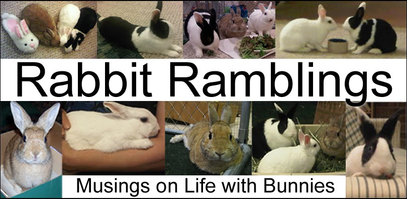 Rabbit Ramblings