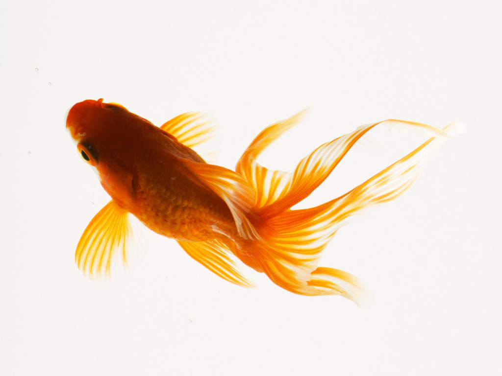 High Definition Photo And Wallpapers: fish pictures,fish ...