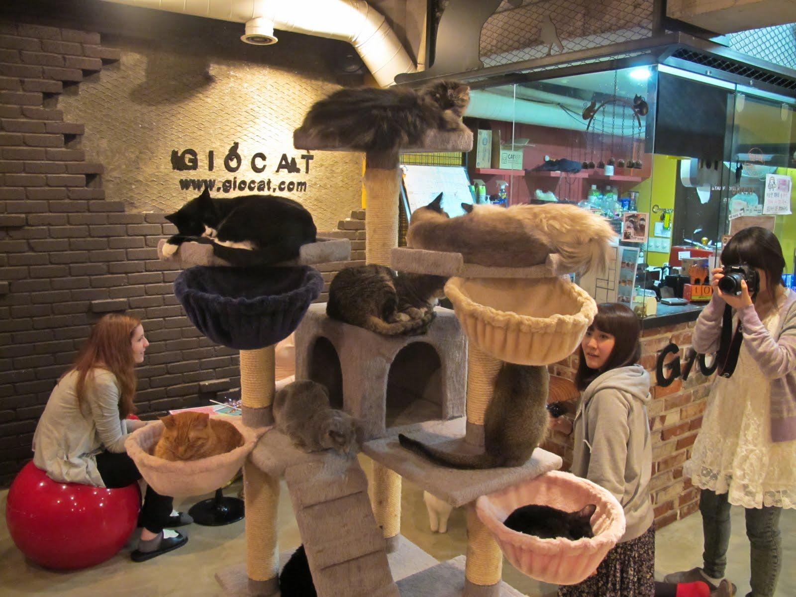 Cat In Japanese Restaurant