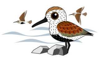 Shorebird Mapping