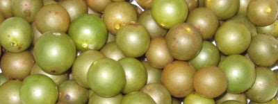 My latest find, green muscadines.