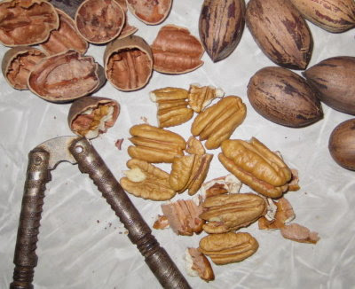 I actually got some pecans this year.