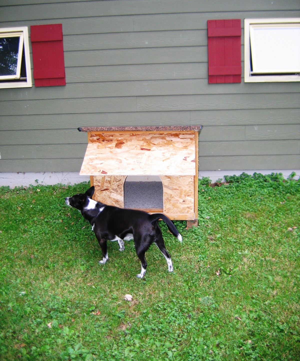 free insulated dog house plans for large dogs. Black Bedroom Furniture Sets. Home Design Ideas