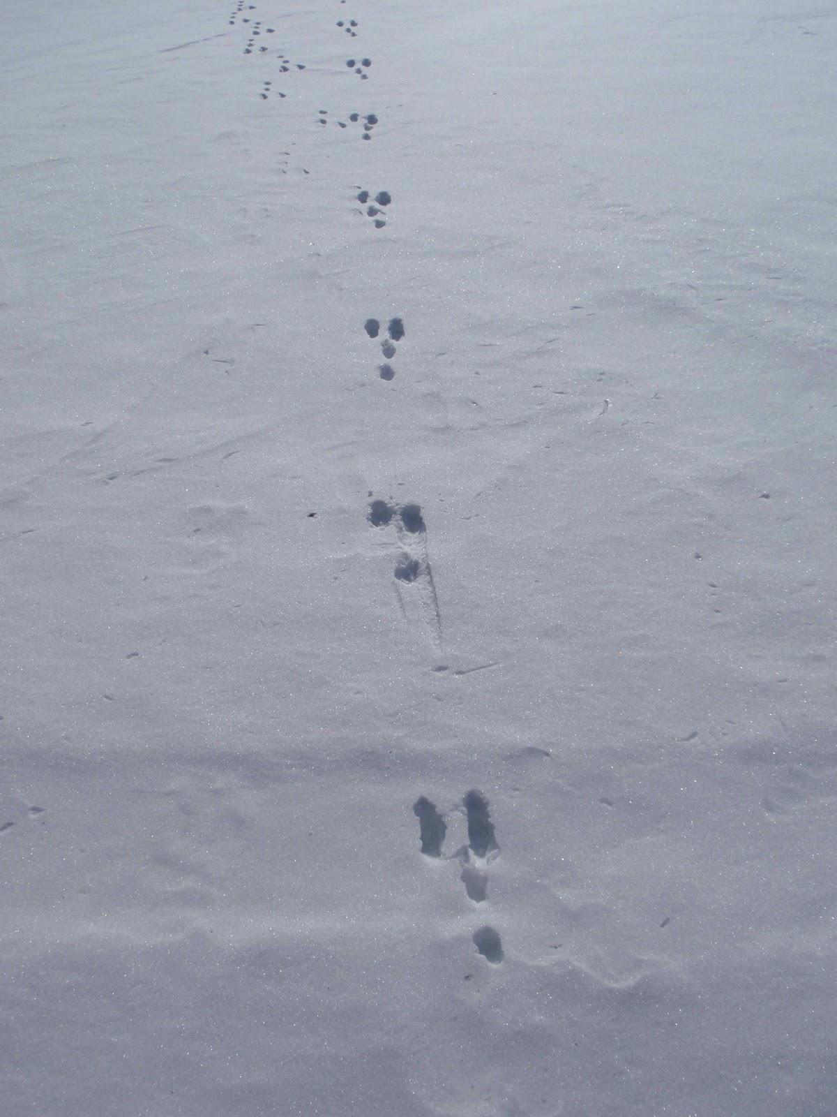 Big Foot In Iowa