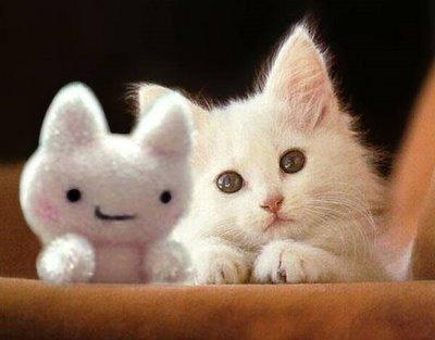 صور قطط للتوقيع فى المنتديات