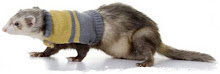 Ferret Fashion ...