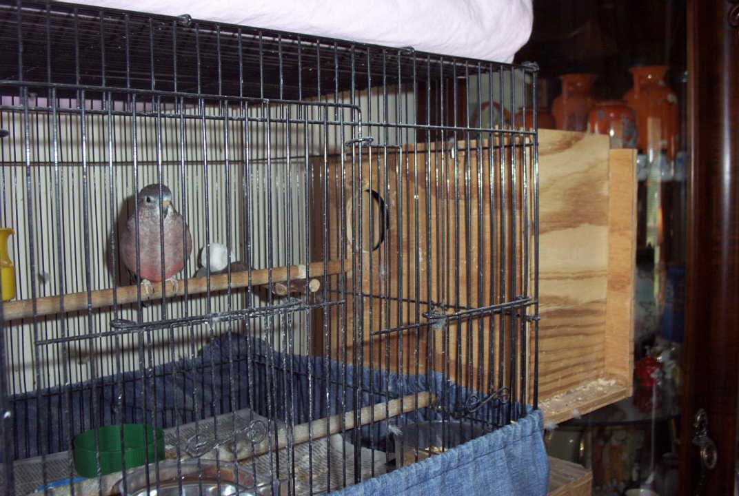 The Splendid Bourke Bird Blog: Bourke Pairing & Nest Boxes ...