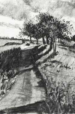 Tree Symbols in Elevation | Lucy Nicholls -Landscape ... |Tree Landscape Drawing