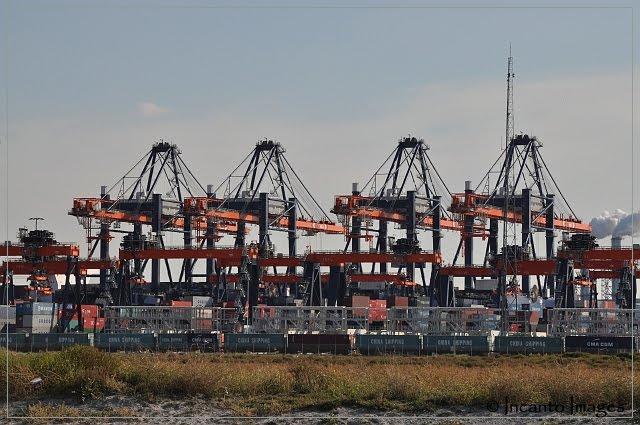 bedrijven haven rotterdam