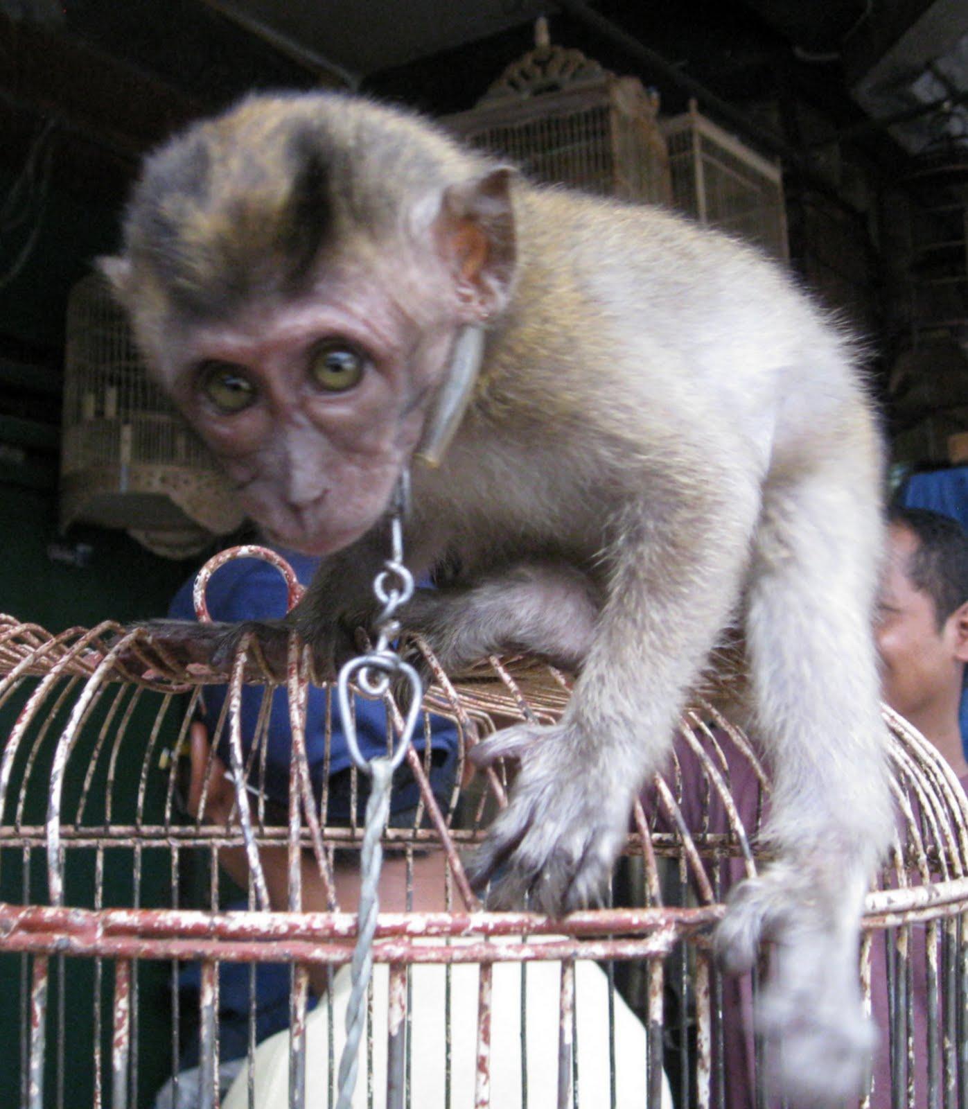 Pramuka: Veggie Revolution: Laws Flaunted: Flourishing Pet Trade