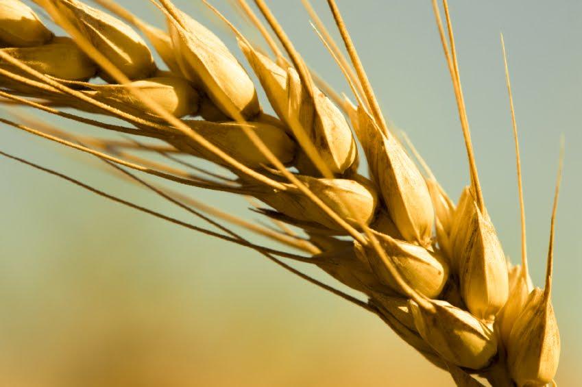 Idaho Wheat Commission News: November 2010
