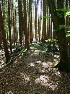 Keltenschanze / Viereckschanze im Laufzorner Holz