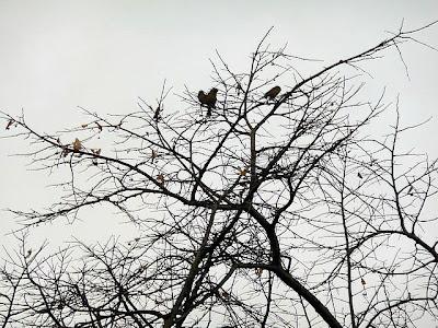 Gorriones trepados en ramas de árbos sin hojas.