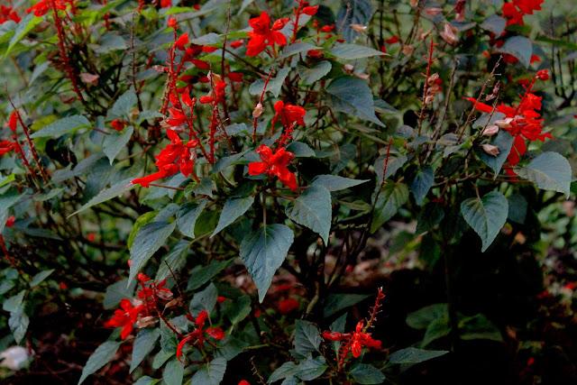 Flores rojas en plantas con hojas verdes