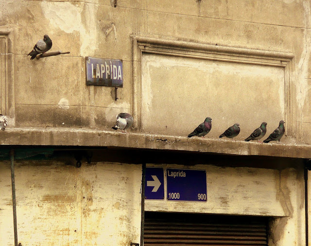 Palomas sobre un alero en fila.