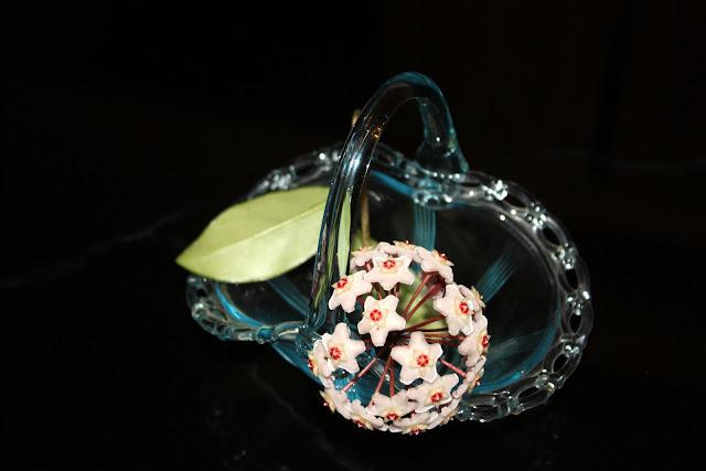Flores de Clepia en una canasta de cristal.