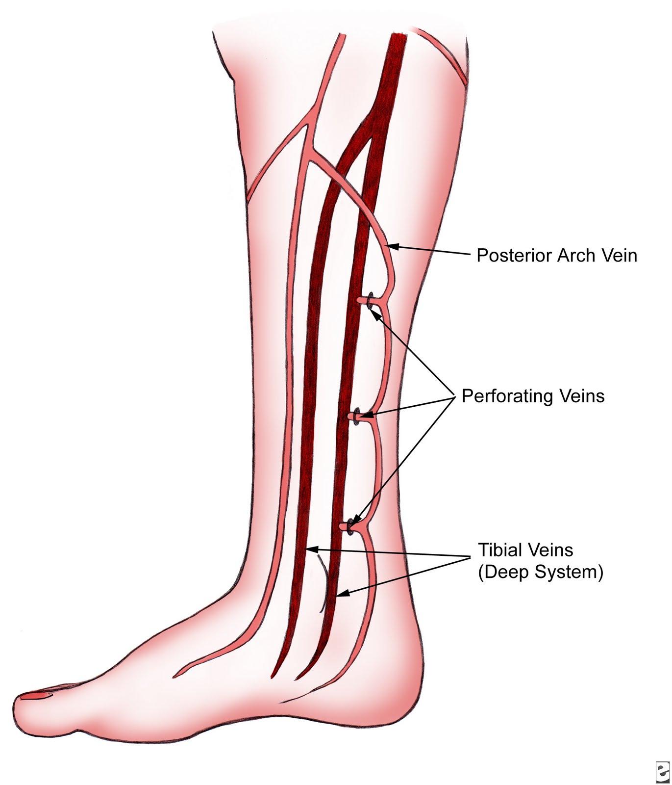 foot pulses diagram 7 way trailer hitch wiring radiologyspirit 2010 07 11