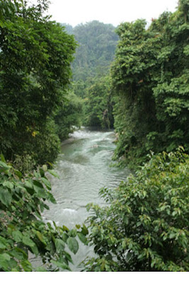 https://i1.wp.com/3.bp.blogspot.com/_FaDvfIKTkCs/Savy4P1FoPI/AAAAAAAAAGI/e0tQwdt3kmw/s400/hutan+tropis.JPG
