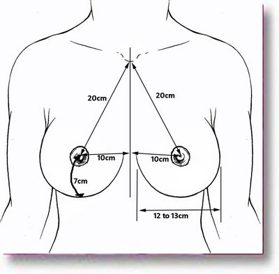 normal breast proportions