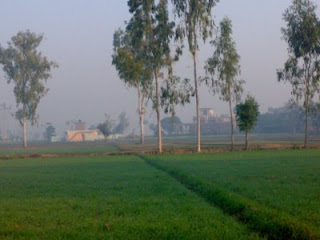 Wheat Fields of Jalkheri Village