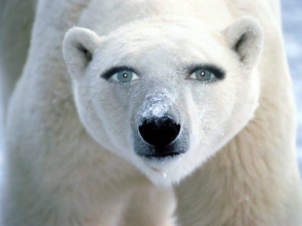 Digital Graphics: Animal Faces