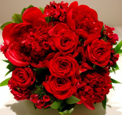 Win Min Beautiful Red Rose Image Romantic Red Rose Stills
