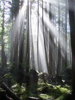 Sunshine Coast, British Columbia, Canada, nature, forest, mist, sunlight