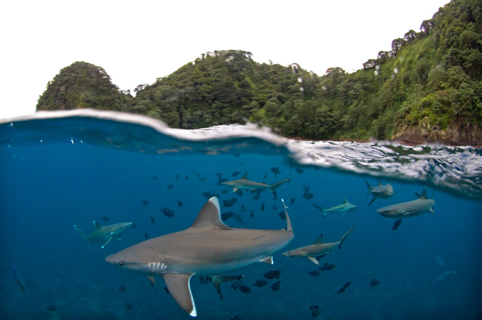 TV with Thinus: National Geographic travels to Shark Island