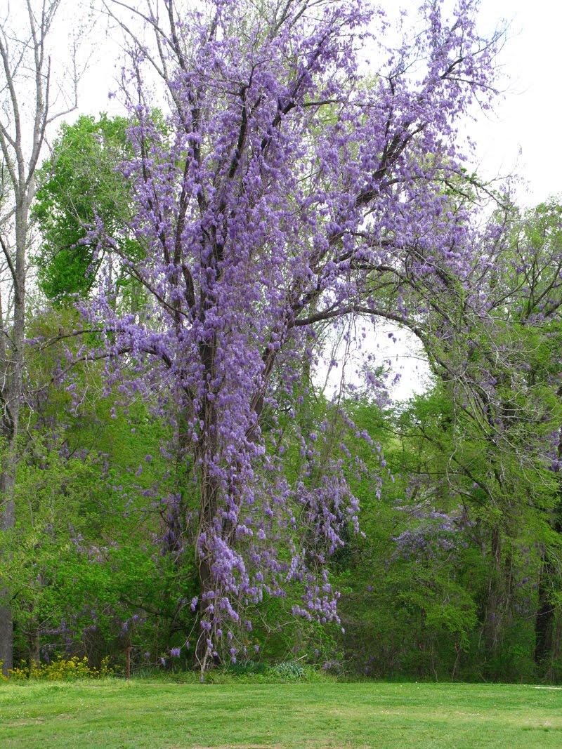 Mcferrin Family Blog April 2010