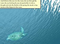 Turtle navigation (Turtle Diary)