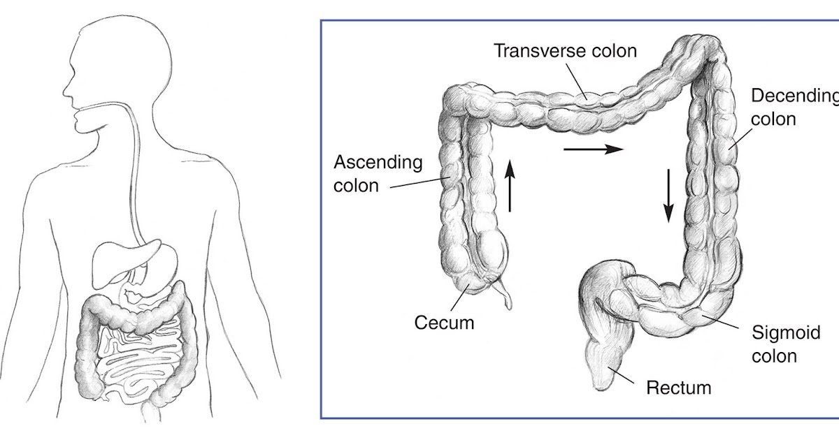 X anal sigmoid colon drawing