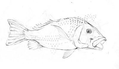 tam's little illustration diary: snappers for snapper