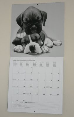 Boxer pups from our puppy calendar